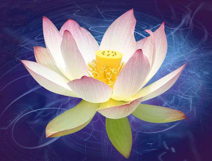 lotus-mady-